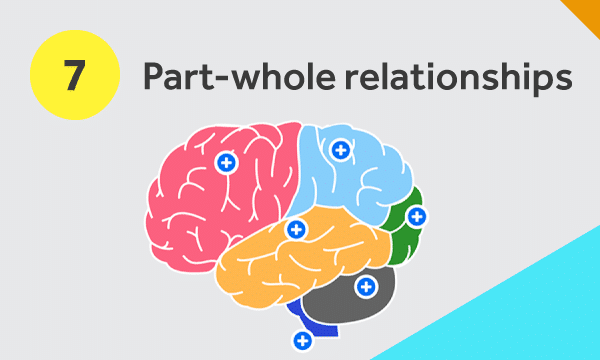Brain diagram to illustrate part-whole relationships